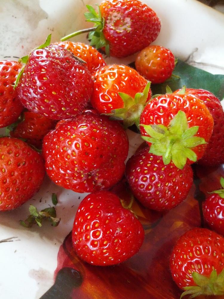 Homemade Strawberries 2013