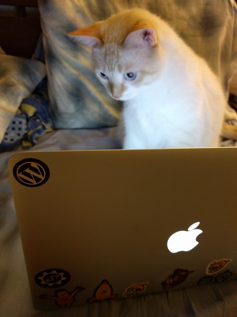 computer-cat.jpg