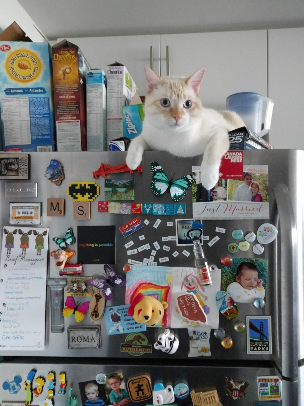fridge-cat