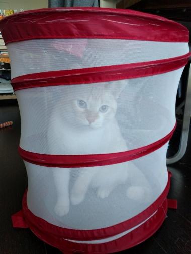 laundry-cat-2