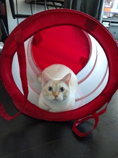 laundry-cat